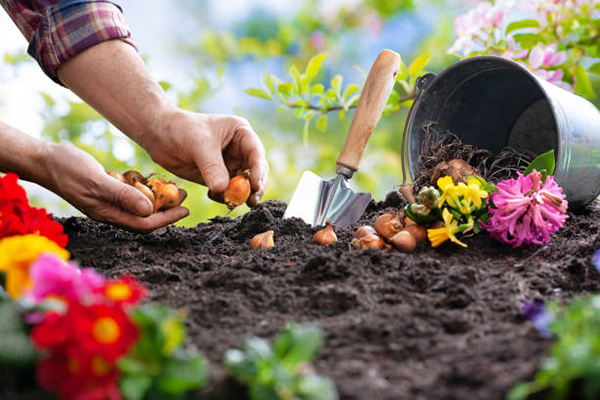 Planting Summer plant bulbs in Spring